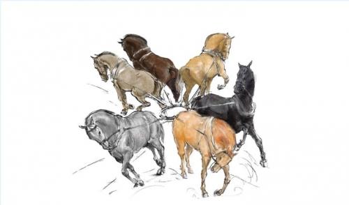 Teamhorses